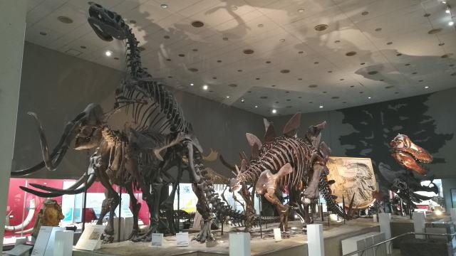 大阪市立自然史博物館 恐竜骨格標本