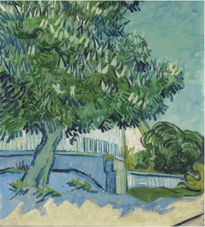 花咲くマロニエの木